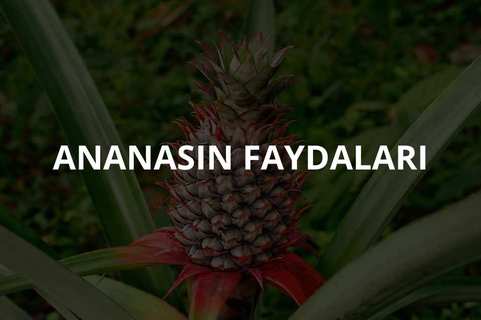 Ananasın Faydaları