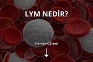 Lym Nedir?