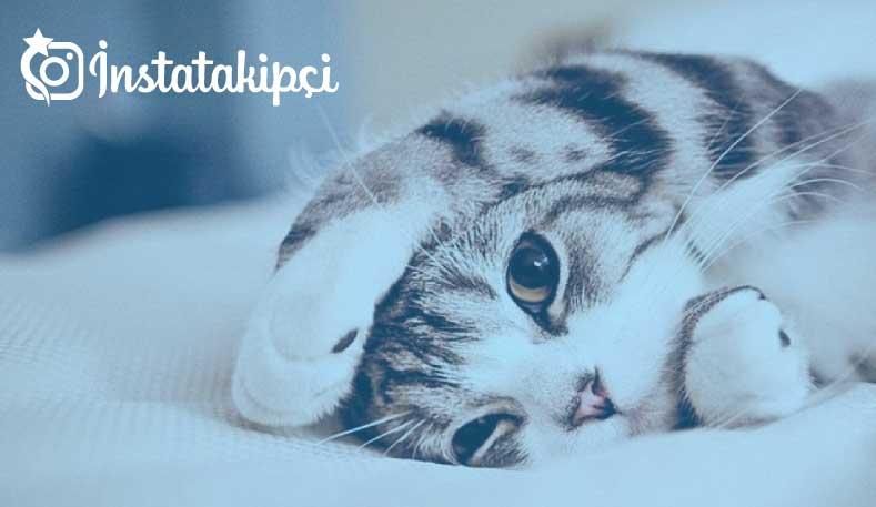 rüyada kedi görmek