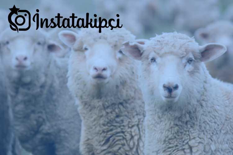 rüyada koyun görmek