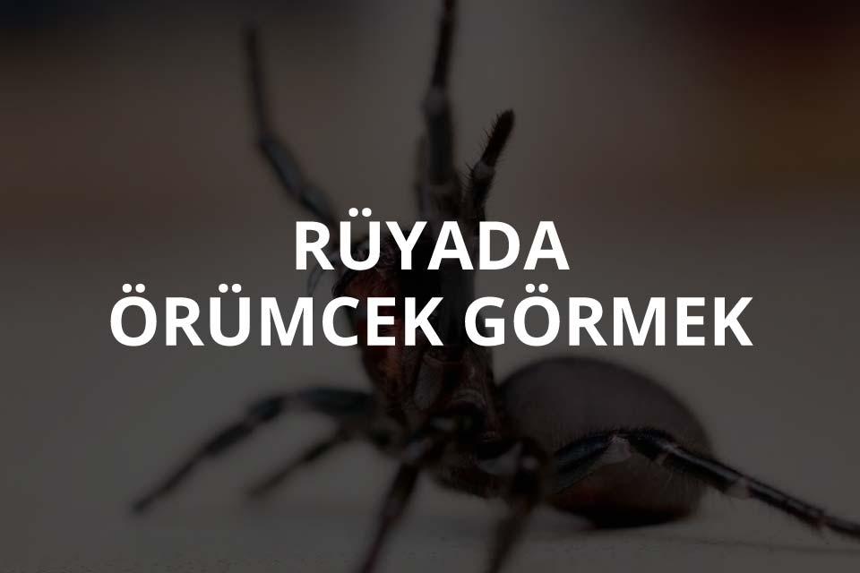 Rüyada Örümcek Görmek